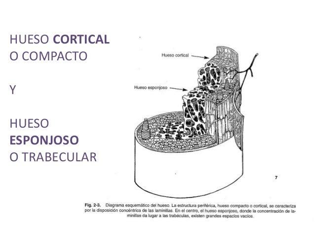 Osteocinematica
