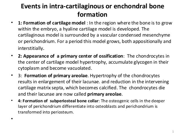 Events in intra-cartilaginous or enchondral bone formation •  •  •  •  1: Formation of cartilage model : In the region whe...