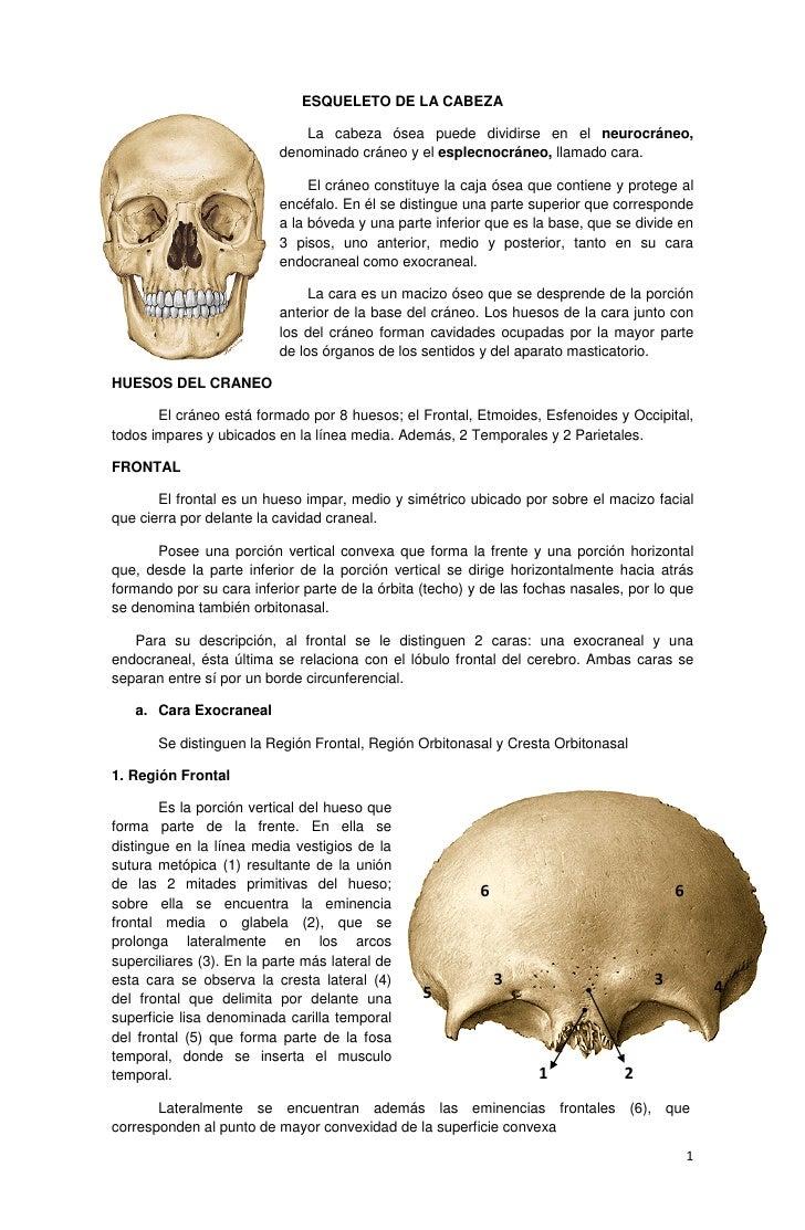 Osteología de cráneo