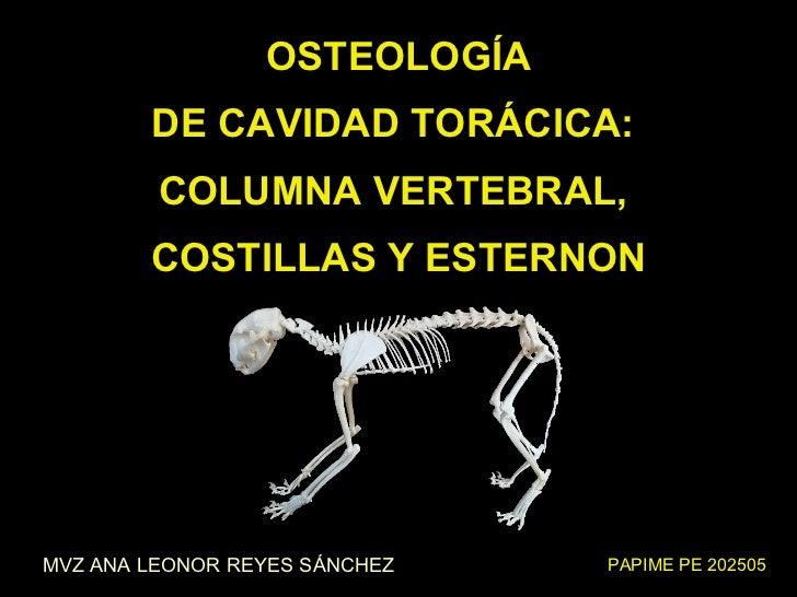 Osteología de la cavidad torácica