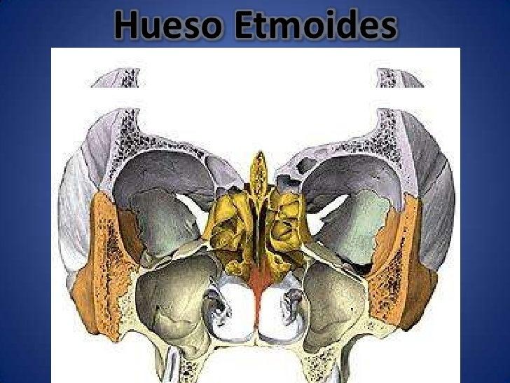 Osteología del cráneo, frontal y etmoides