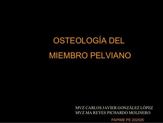 OSTEOLOGÍA DELMIEMBRO PELVIANO     MVZ CARLOS JAVIER GONZÁLEZ LÓPEZ     MVZ MA REYES PICHARDO MOLINERO                   P...