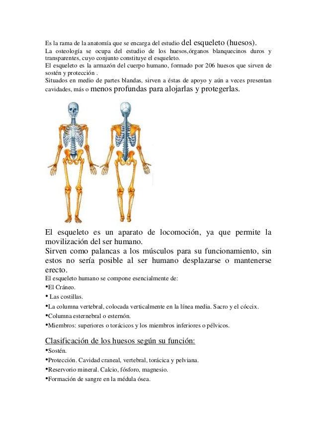 Es la rama de la anatomía que se encarga del estudio del esqueleto (huesos). La osteología se ocupa del estudio de los hue...