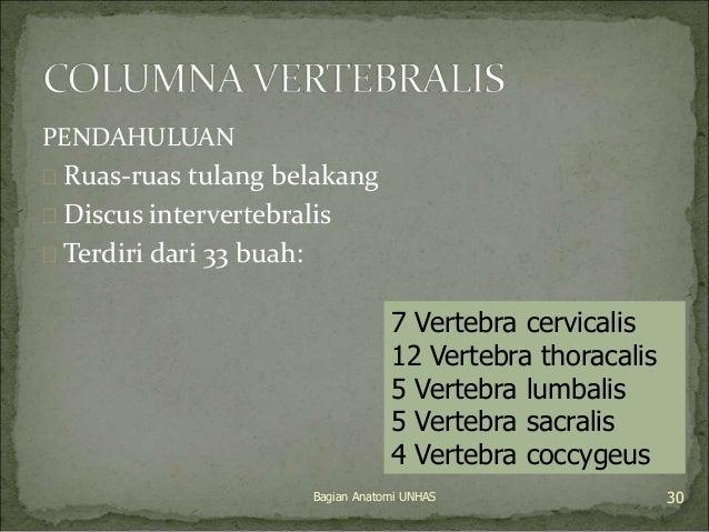 PENDAHULUAN   Ruas-ruas tulang belakang   Discus intervertebralis   Terdiri dari 33 buah:  7 Vertebra cervicalis  12 Ve...