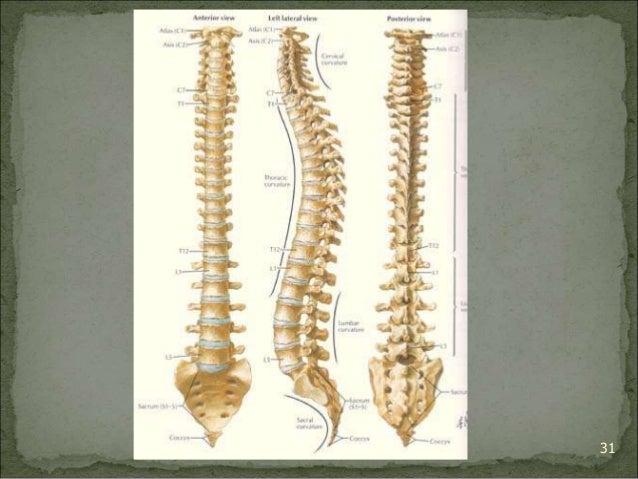 Bagian Anatomi UNHAS 31