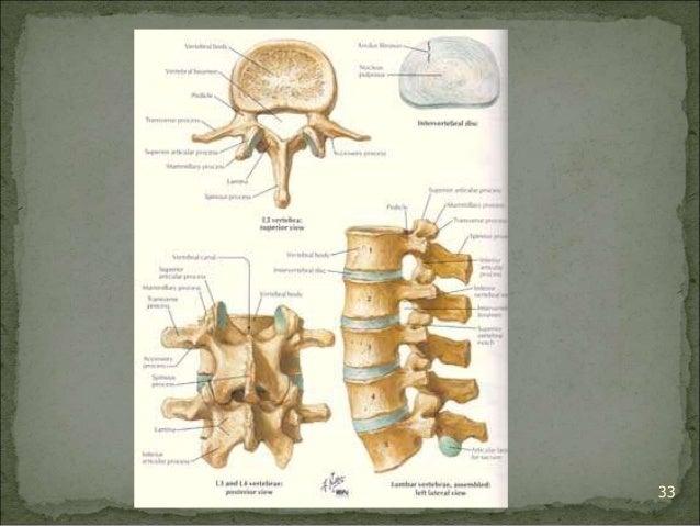 Bagian Anatomi UNHAS 33