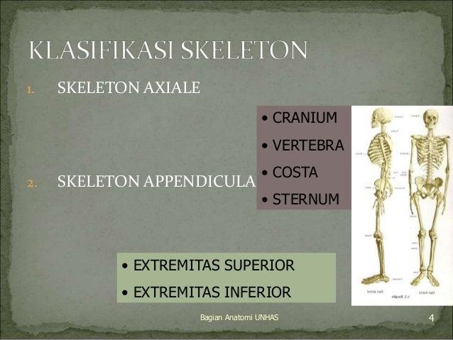 1. SKELETON AXIALE  • CRANIUM  • VERTEBRA  • COSTA  • STERNUM  2. SKELETON APPENDICULARE  • EXTREMITAS SUPERIOR  • EXTREMI...