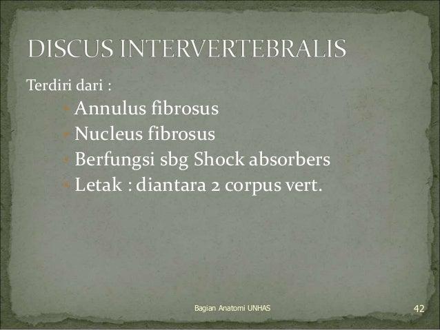 Terdiri dari :  • Annulus fibrosus  • Nucleus fibrosus  • Berfungsi sbg Shock absorbers  • Letak : diantara 2 corpus vert....