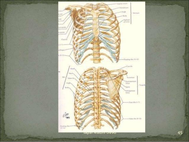 Bagian Anatomi UNHAS 45