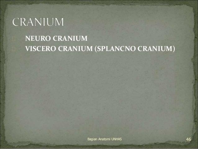  NEURO CRANIUM   VISCERO CRANIUM (SPLANCNO CRANIUM)  Bagian Anatomi UNHAS 46