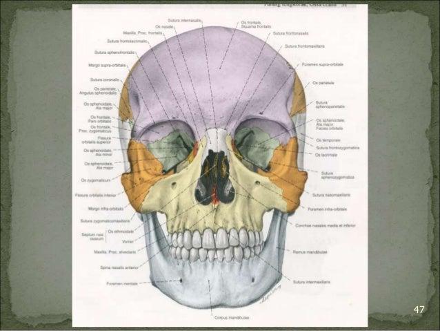 Bagian Anatomi UNHAS 47