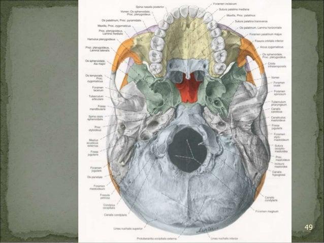 Bagian Anatomi UNHAS 49