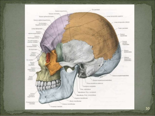 Bagian Anatomi UNHAS 50