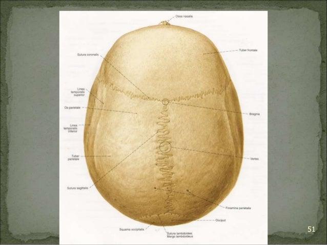 Bagian Anatomi UNHAS 51