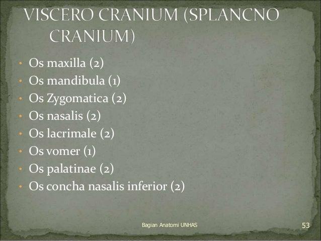 • Os maxilla (2)  • Os mandibula (1)  • Os Zygomatica (2)  • Os nasalis (2)  • Os lacrimale (2)  • Os vomer (1)  • Os pala...