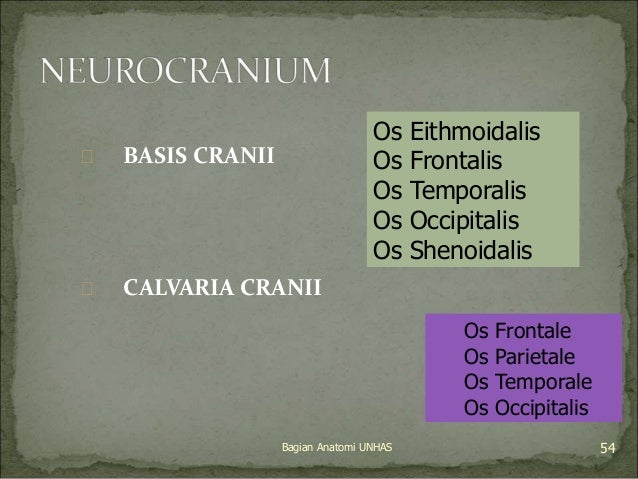  BASIS CRANII   CALVARIA CRANII  Os Eithmoidalis  Os Frontalis  Os Temporalis  Os Occipitalis  Os Shenoidalis  Os Fronta...