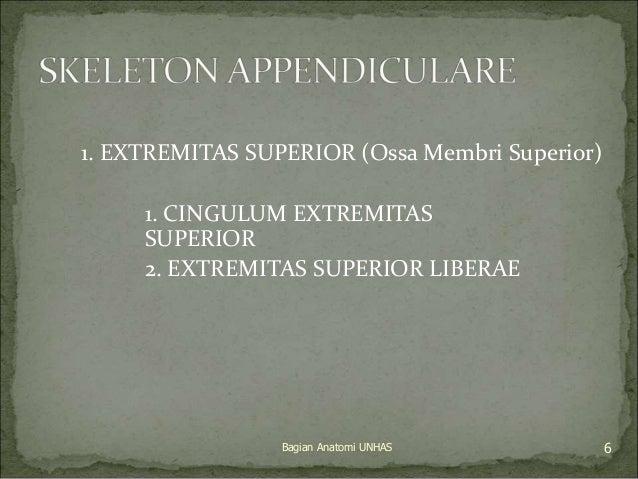 1. EXTREMITAS SUPERIOR (Ossa Membri Superior)  1. CINGULUM EXTREMITAS  SUPERIOR  2. EXTREMITAS SUPERIOR LIBERAE  Bagian An...