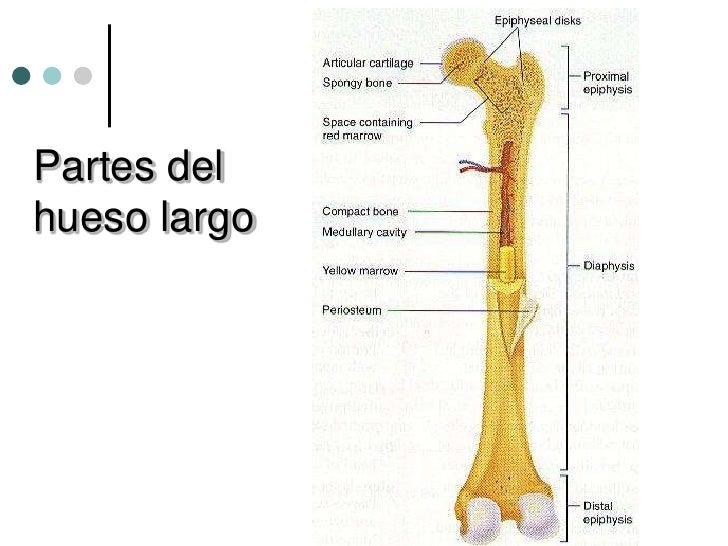 osteologia 1141 6 728