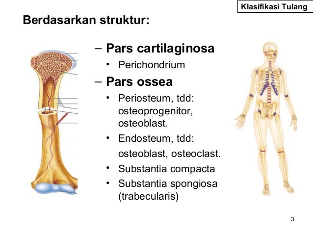 osteologi da psik semester 2 kd 2 anatomy