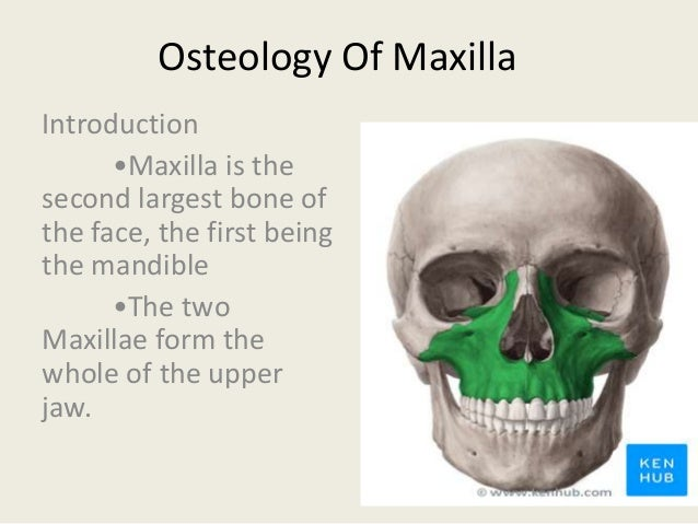 2 osteology of maxilla introduction