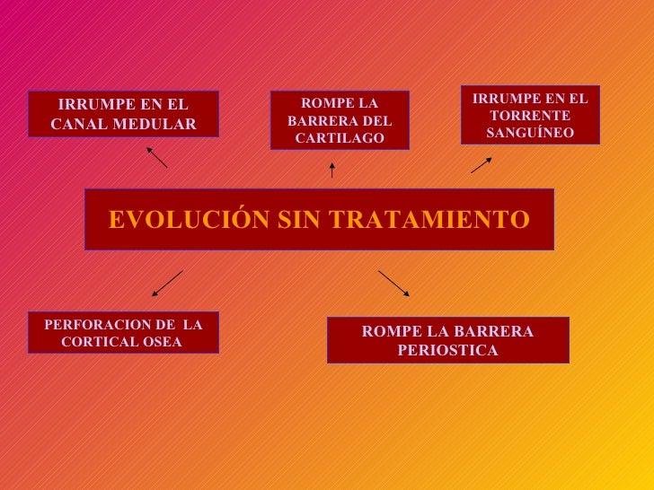 EVOLUCIÓN SIN TRATAMIENTO IRRUMPE EN EL CANAL MEDULAR ROMPE LA BARRERA DEL CARTILAGO IRRUMPE EN EL TORRENTE SANGUÍNEO PERF...
