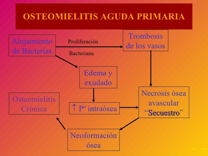 "OSTEOMIELITIS AGUDA PRIMARIA Alojamiento de Bacterias    Pº intraósea Proliferación Bacteriana Necrosis ósea avascular "" ..."