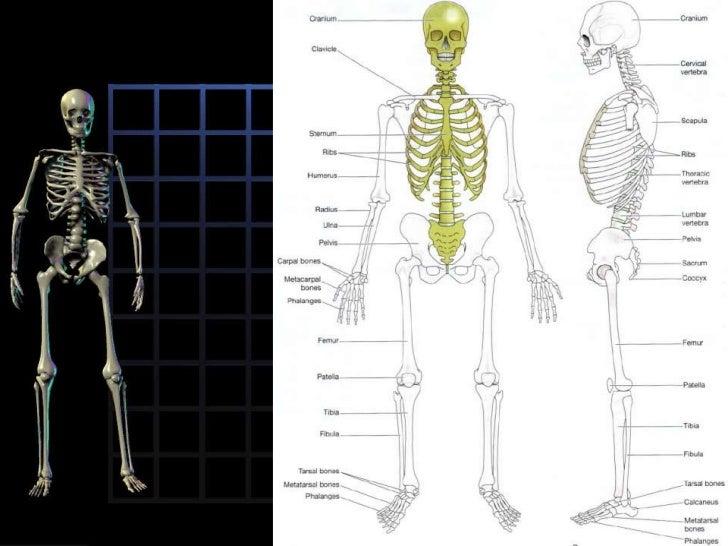 Osteoporosis Slide 3