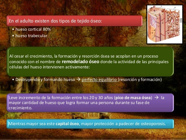 En la mujer… • Aprox. 5 años antes de la menopausia, se inicia la declinación en la producción de estrógenos por parte de ...