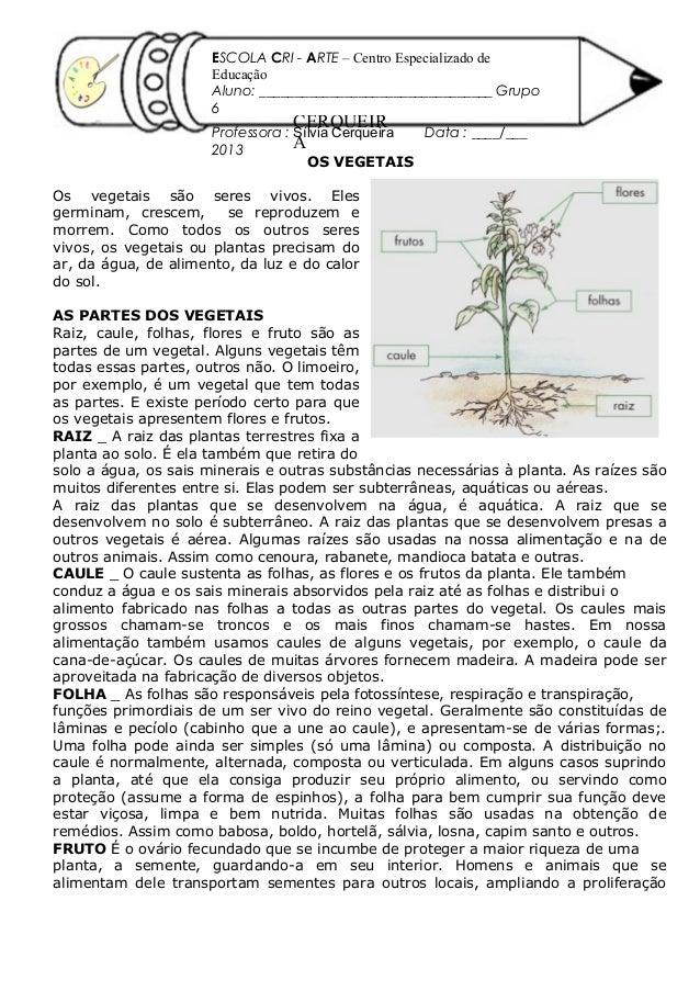 OS VEGETAIS Os vegetais são seres vivos. Eles germinam, crescem, se reproduzem e morrem. Como todos os outros seres vivos,...