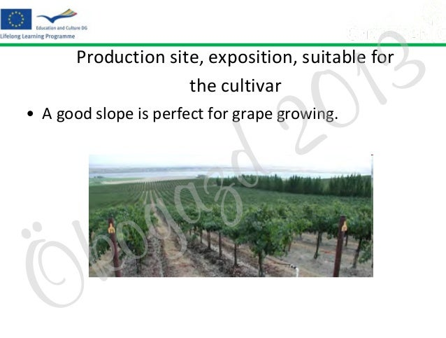 3 1 0  Production site, exposition, suitable for the cultivar  2 d  • A good slope is perfect for grape growing.  Ö  o k  ...