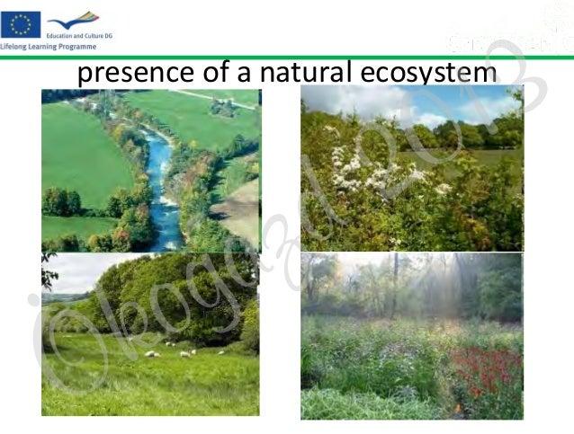 3 1 0  presence of a natural ecosystem  Ö  o k  z a g  2 d