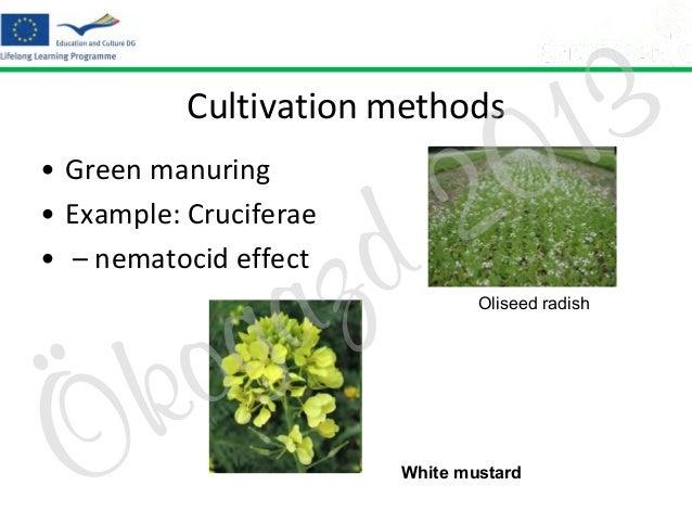 Cultivation methods • Green manuring • Example: Cruciferae • – nematocid effect  Ö  o k  z a g  2 d  3 1 0  Oliseed radish...
