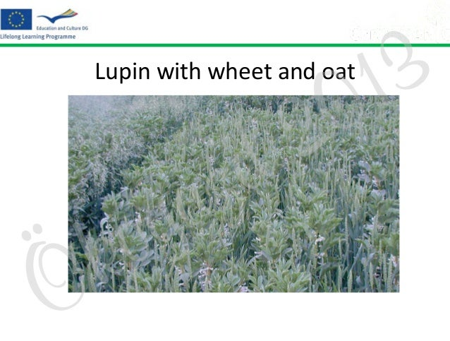 3 1 0  Lupin with wheet and oat  Ö  o k  z a g  2 d