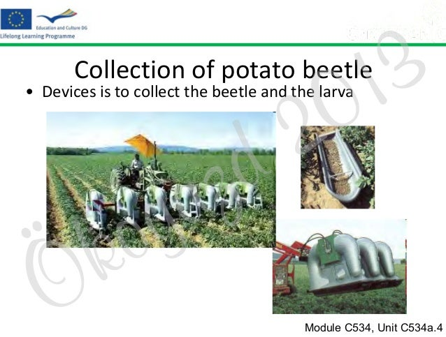 3 1 0  Collection of potato beetle  2 d  • Devices is to collect the beetle and the larva  Ö  o k  z a g  Module C534, Uni...
