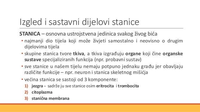 Izgled i sastavni dijelovi stanice STANICA – osnovna ustrojstvena jedinica svakog živog bića • najmanji dio tijela koji mo...