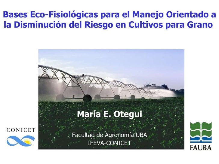 Bases Eco-Fisiológicas para el Manejo Orientado a la Disminución del Riesgo en Cultivos para Grano  María E. Otegui Facult...