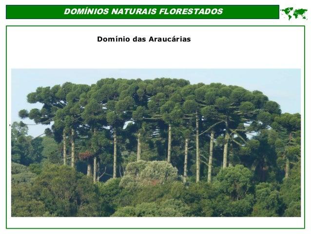 ' DOMÍNIOS NATURAIS FLORESTADOS  Domínio das Araucárias