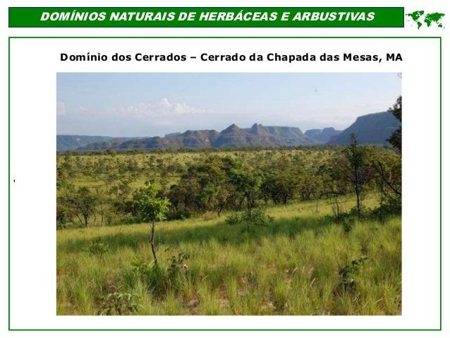 ' DOMÍNIOS NATURAIS DE HERBÁCEAS E ARBUSTIVAS  Domínio dos Cerrados – Cerrado da Chapada das Mesas, MA