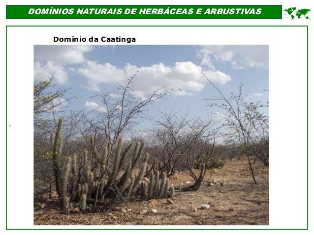 ' DOMÍNIOS NATURAIS DE HERBÁCEAS E ARBUSTIVAS  Domínio da Caatinga