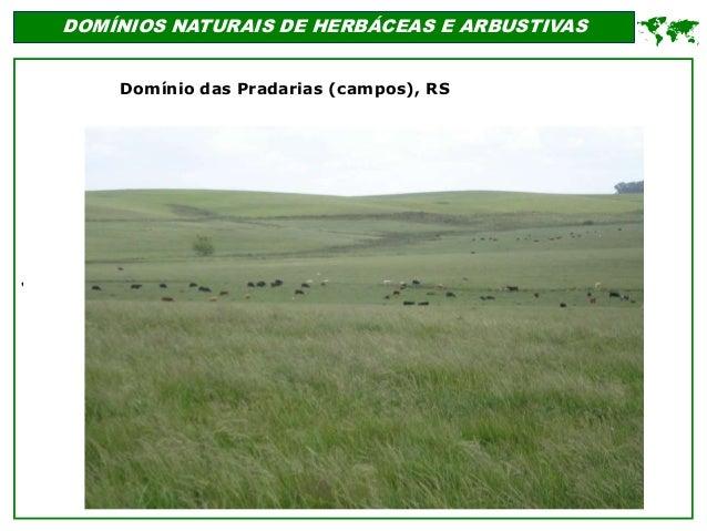' DOMÍNIOS NATURAIS DE HERBÁCEAS E ARBUSTIVAS  Domínio das Pradarias (campos), RS