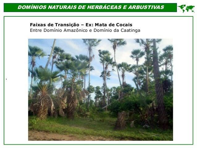 ' DOMÍNIOS NATURAIS DE HERBÁCEAS E ARBUSTIVAS  Faixas de Transição – Ex: Mata de Cocais Entre Domínio Amazônico e Domínio...