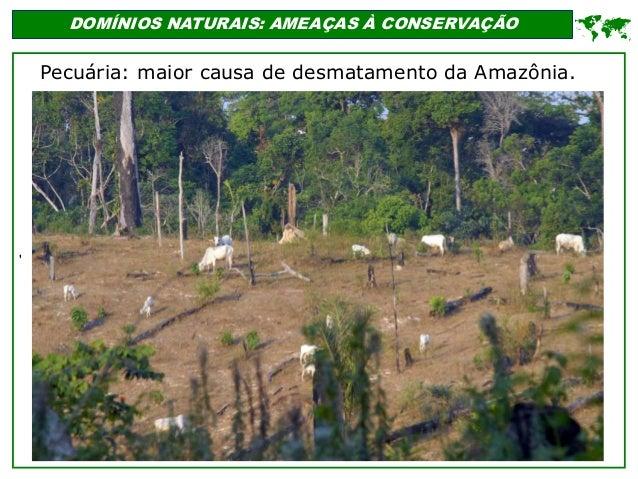 ' DOMÍNIOS NATURAIS: AMEAÇAS À CONSERVAÇÃO  Pecuária: maior causa de desmatamento da Amazônia.