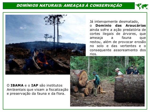 ' DOMÍNIOS NATURAIS: AMEAÇAS À CONSERVAÇÃO  Já intensamente desmatado, o Domínio das Araucárias ainda sofre a ação predat...