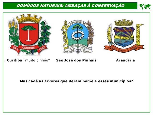 ' DOMÍNIOS NATURAIS: AMEAÇAS À CONSERVAÇÃO  Curitiba ''muito pinhão'' Mas cadê as árvores que deram nome a esses municípi...
