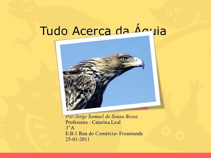 Tudo Acerca da Águia  Por:Jorge Samuel de Sousa Bessa  Professora : Catarina Leal 3º  A  E.B.1 Rua do Comércio- Freamunde ...