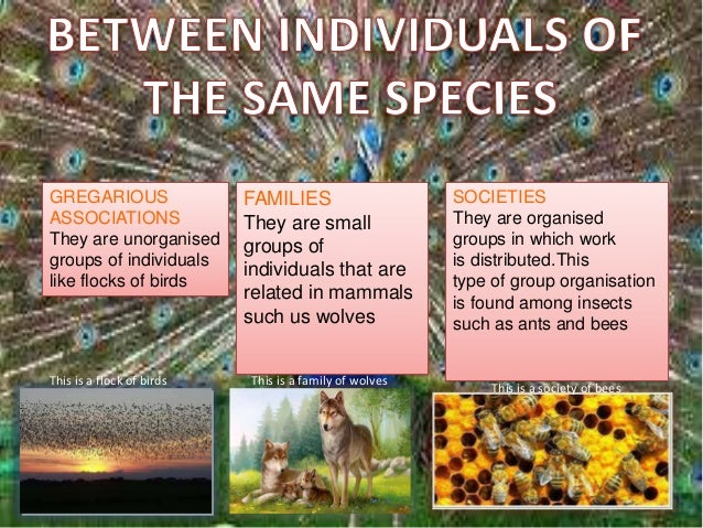 Relationships in an ecosystem: mutualism, comensalism and parasitism.