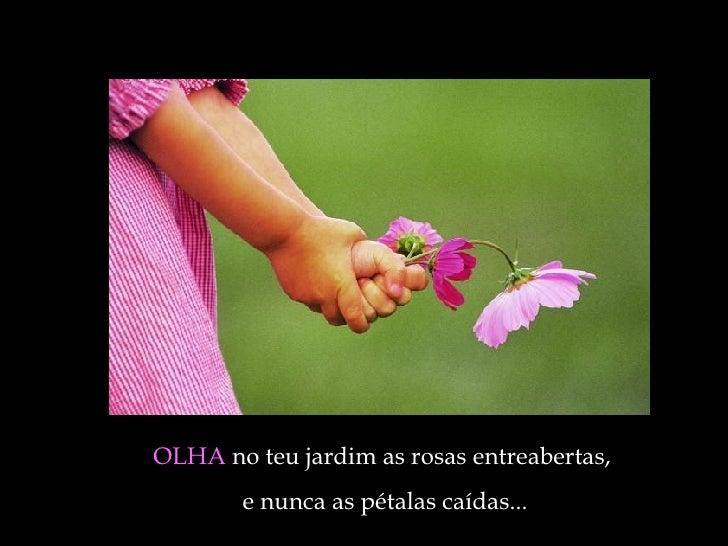 OLHA  no teu jardim as rosas entreabertas,  e nunca as pétalas caídas ...