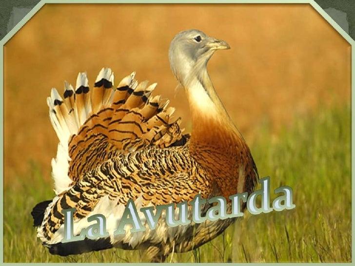 La Avutarda<br />