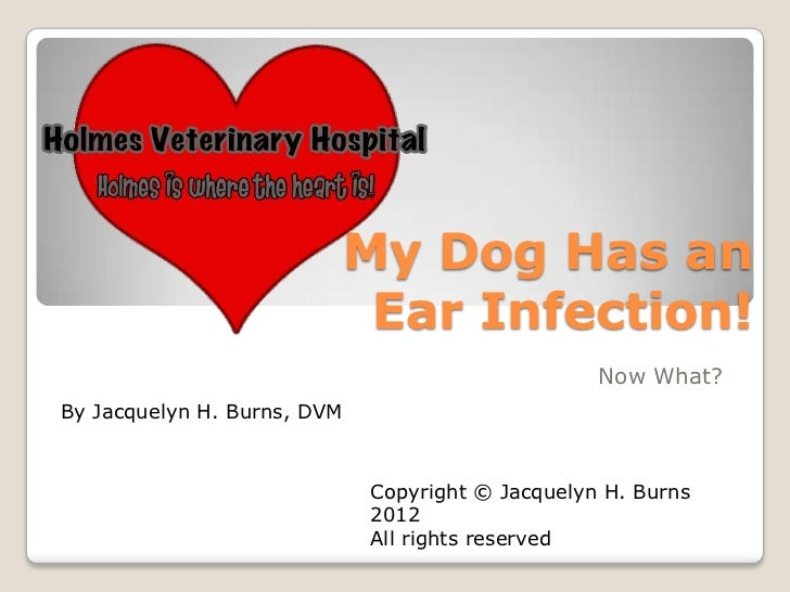 My Dog Has an                              Ear Infection!                                                  Now What?By Jac...