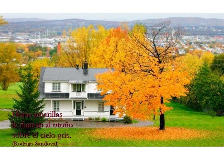 Hojas amarillas le danzan al otoño sobre el cielo gris. (Rodrigo Sandoval)